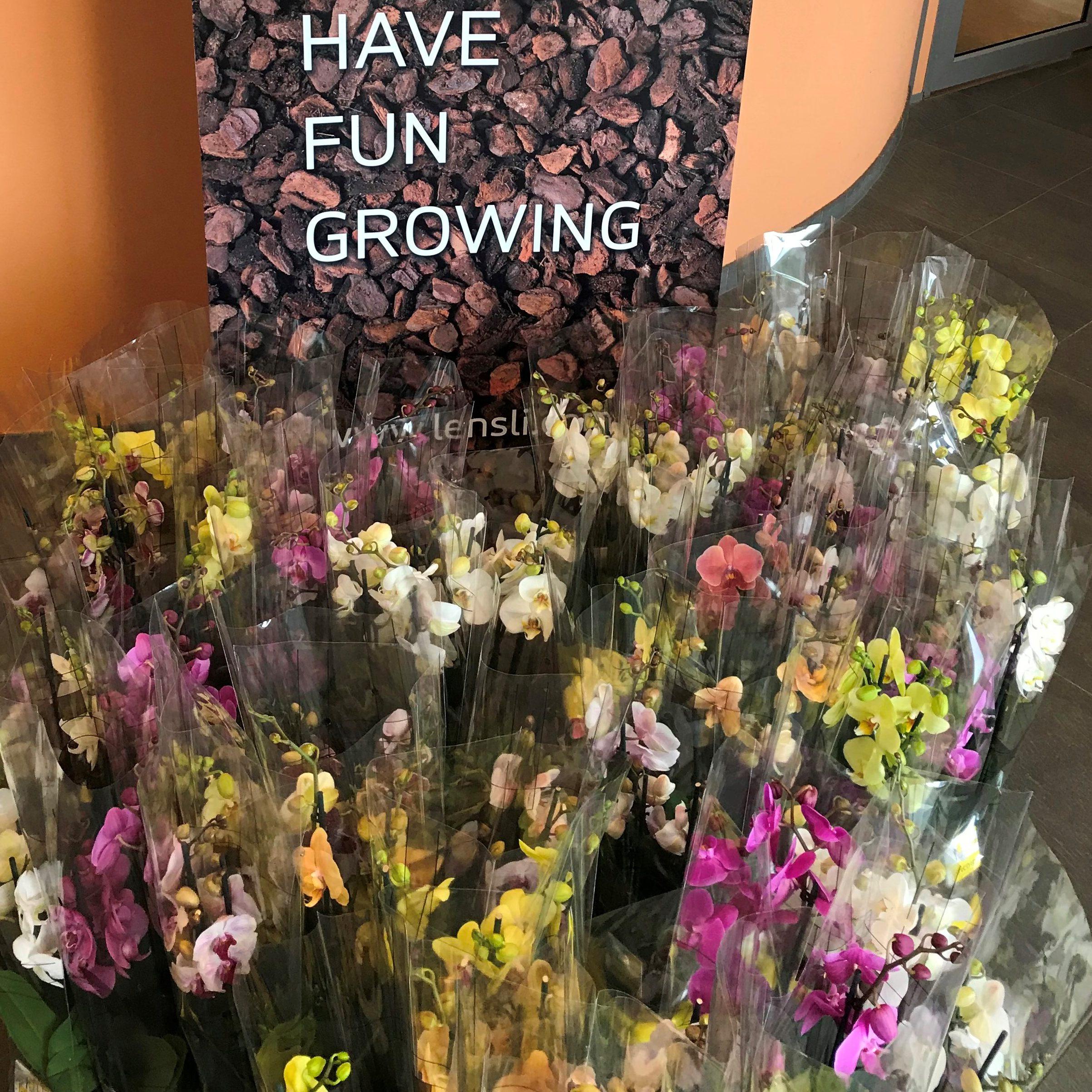 Lensli steunt FlowerBoostChallenge